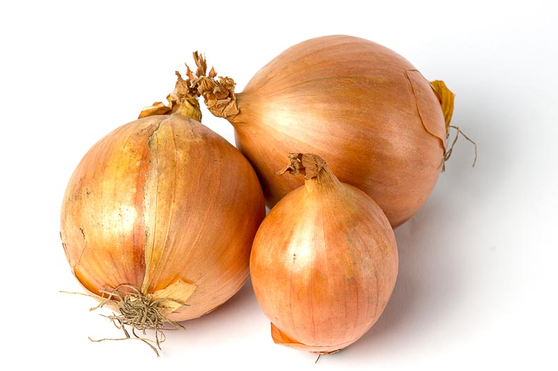 Reality Internet Marketing - Vegetable Portfolio for Products onions, tomatoes, mushrooms, cabbage